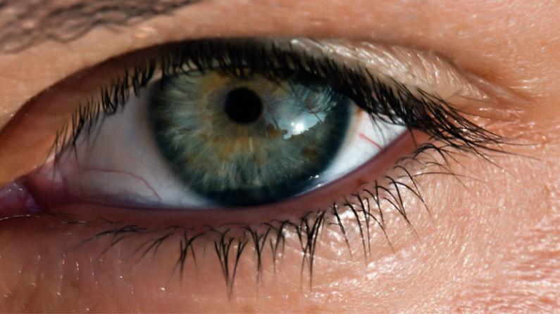 funzione della retina